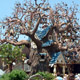 Disneyland Park (California) 064