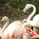 Parco Natura Viva 038