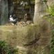 Parco Natura Viva 050
