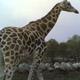 Safari Park Pombia 002