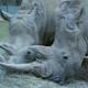 Safari Park Pombia 003