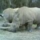 Safari Park Pombia 004