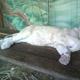Safari Park Pombia 007