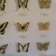Safari Park Pombia 009