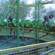 Safari Park Pombia 021