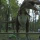 Safari Park Pombia 036