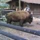 Safari Park Pombia 044