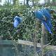 Safari Park Pombia 048
