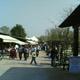 Safari Park Pombia 058