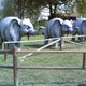 Safari Park Pombia 063