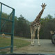 Safari Park Pombia 068