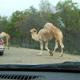 Safari Park Pombia 069