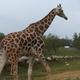 Safari Park Pombia 070