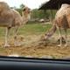 Safari Park Pombia 071