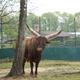 Safari Park Pombia 072