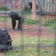Zoosafari Fasanolandia 015