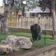 Zoosafari Fasanolandia 016