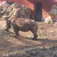 Zoosafari Fasanolandia 019