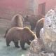 Zoosafari Fasanolandia 020