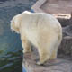 Zoosafari Fasanolandia 021