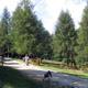 Jungle Raider Park - Margno 005