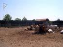 Cowboyland 028