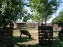 Cowboyland 029